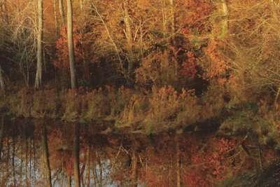 FEATURE: The Autumn Walk